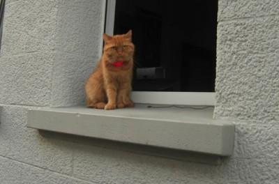 springen katzen vom balkon runter